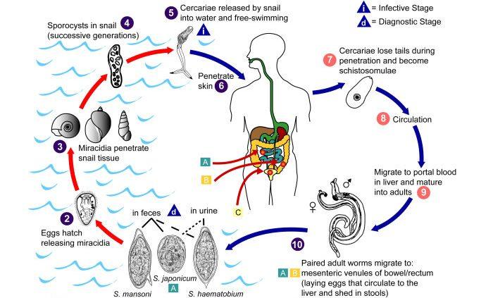 blasenkrebs symptome endstadium