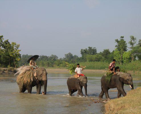Elefanten in Nepal