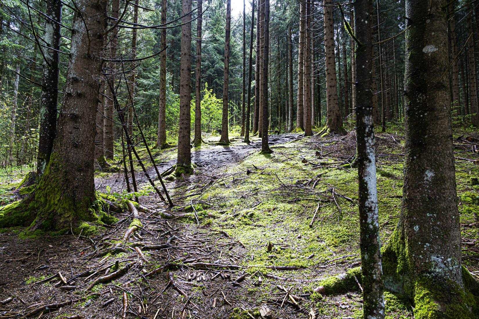Wald noch zu Beginn des Aufstieges